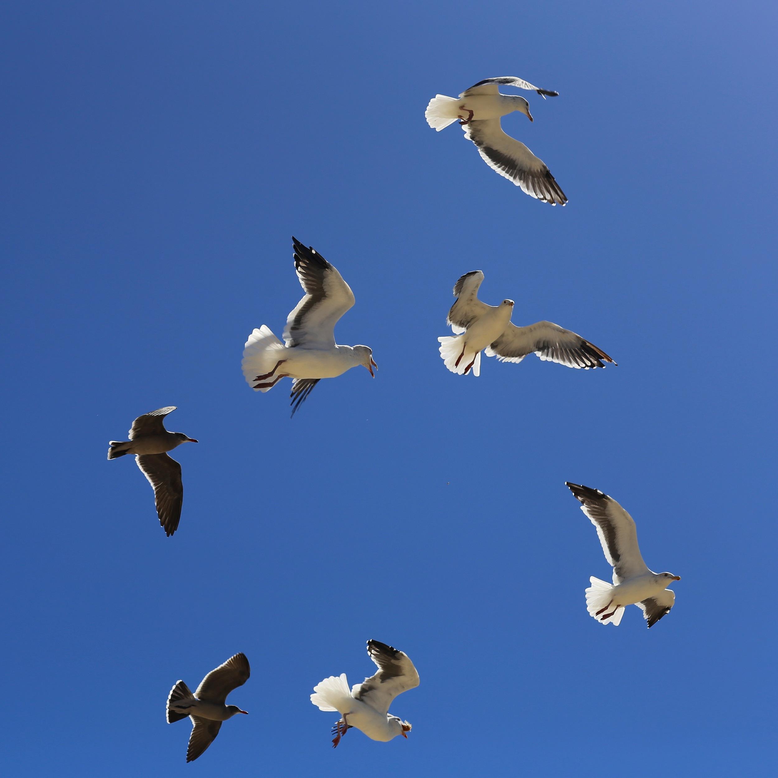 Venice Beach Gulls