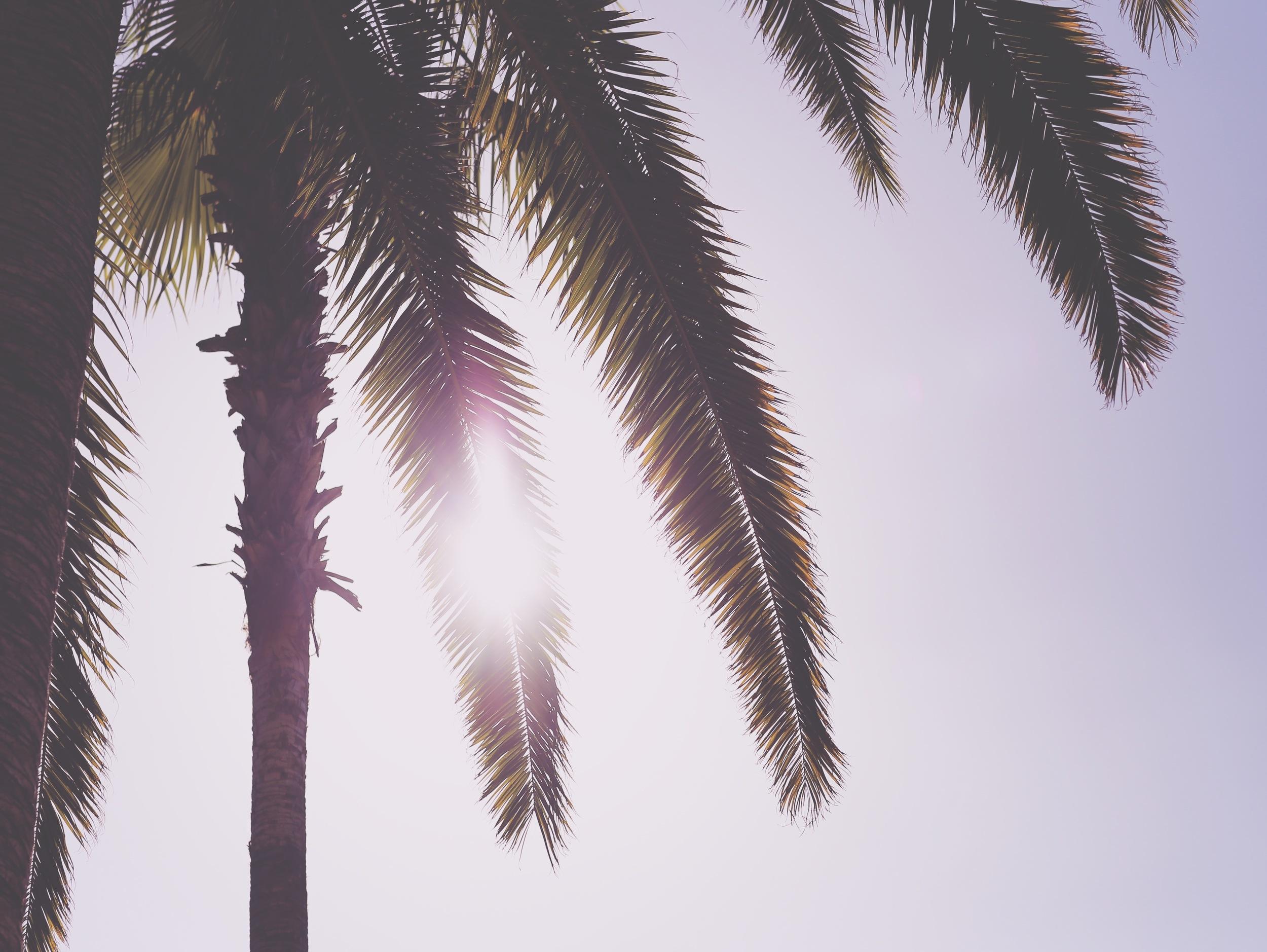 Sunlight Through Palm Branches