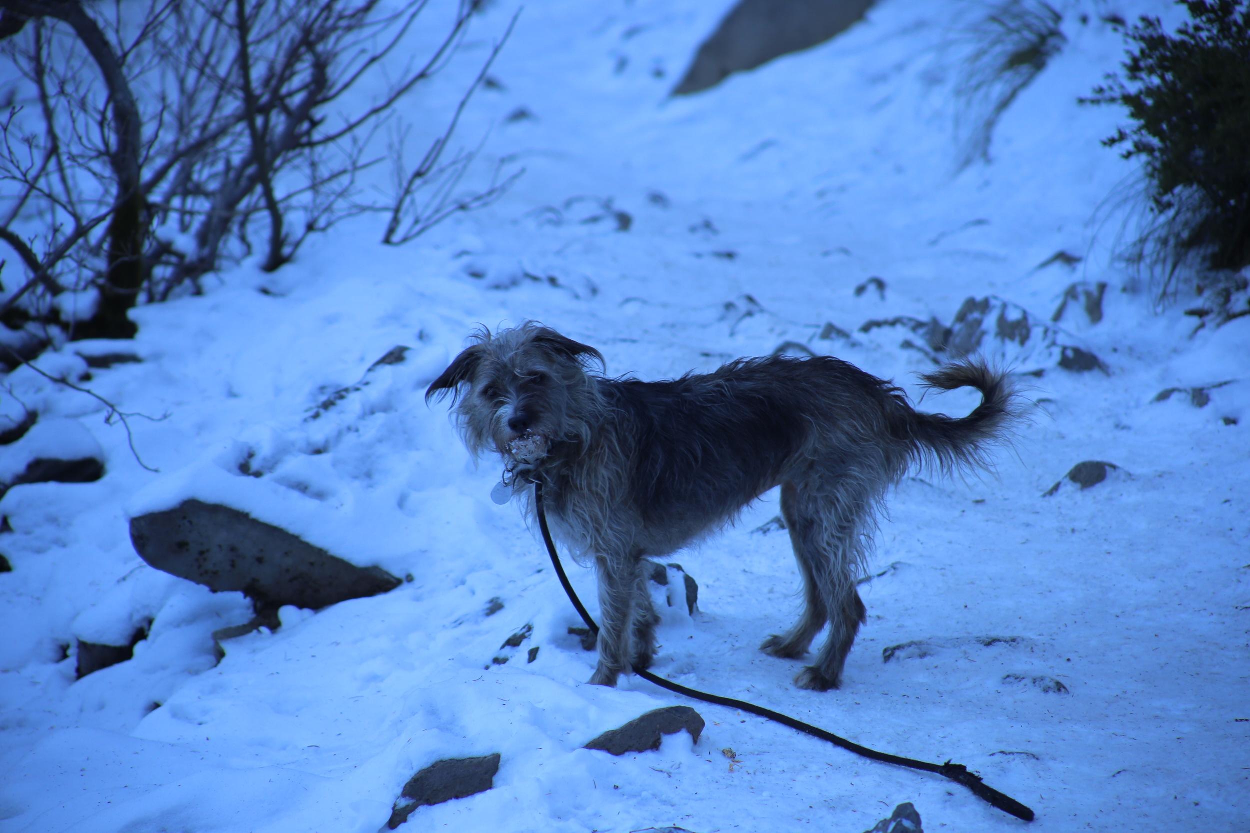 Maddie the Magic Dog loves snow