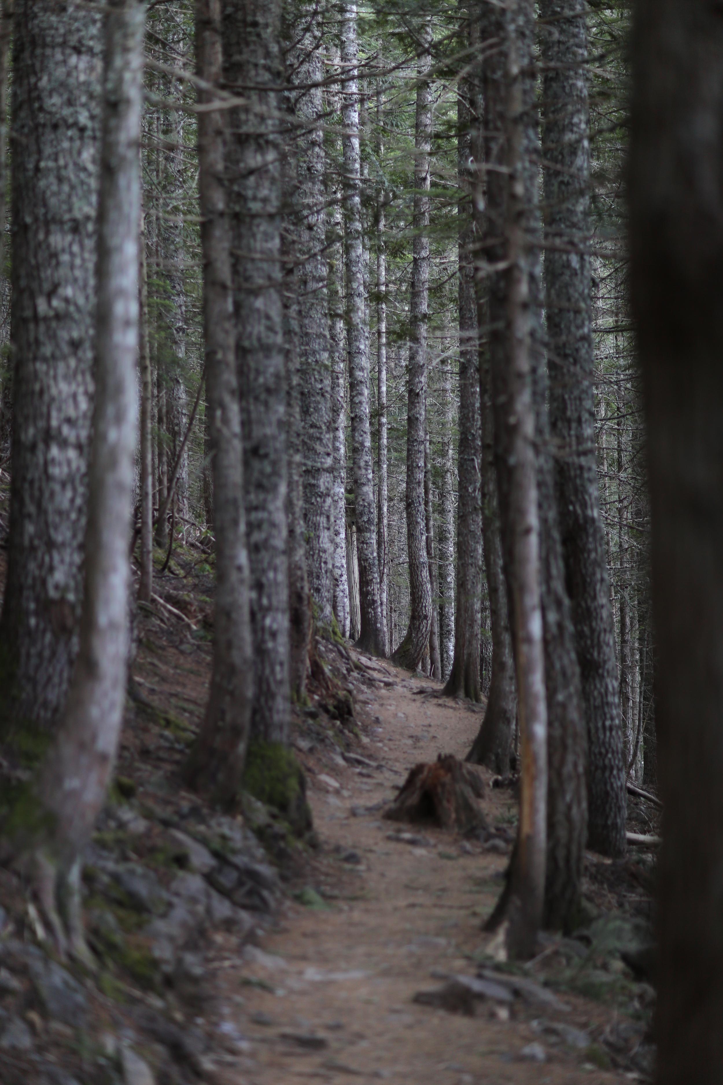 The trail below Mirror Lake