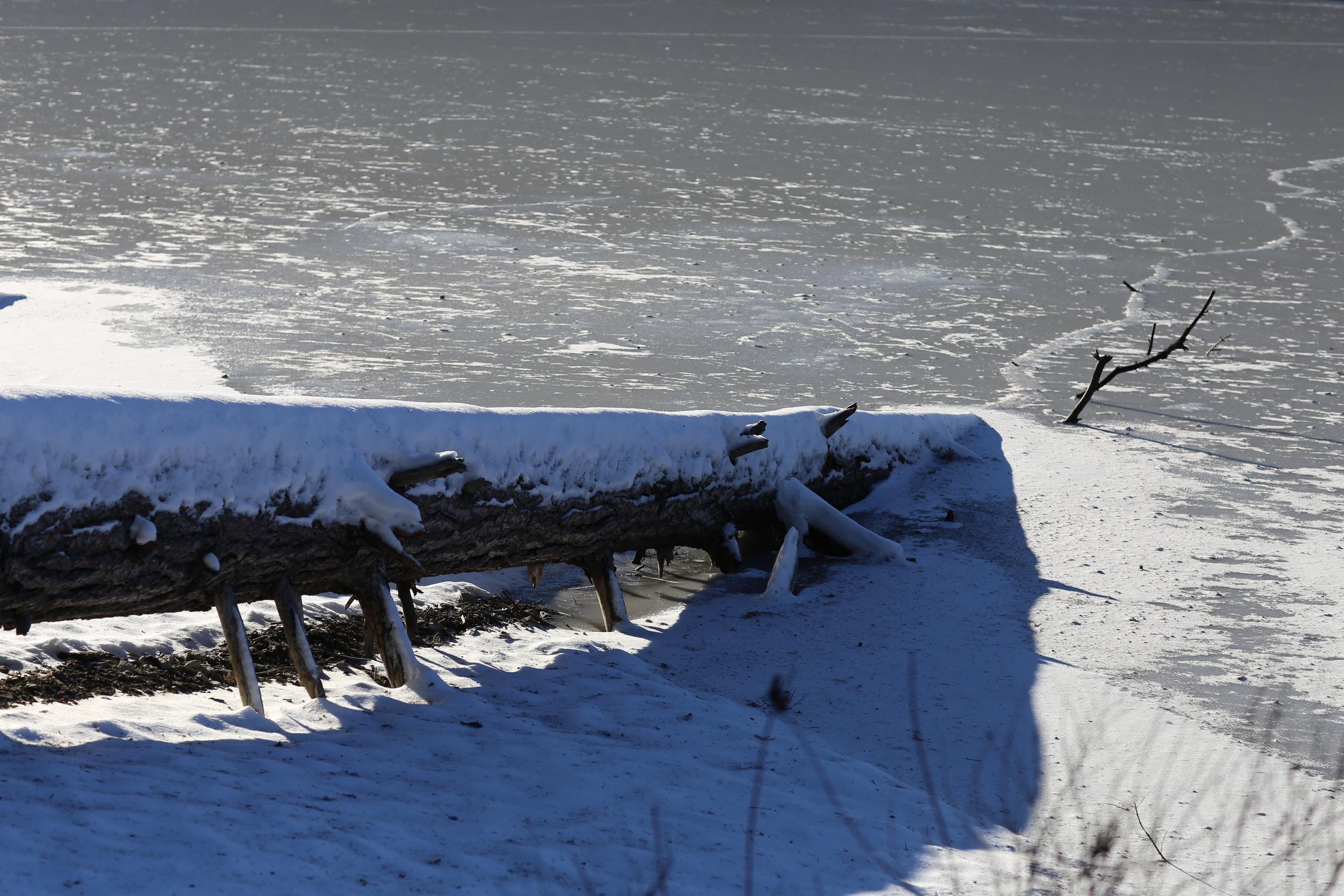 Fallen tree on the beach
