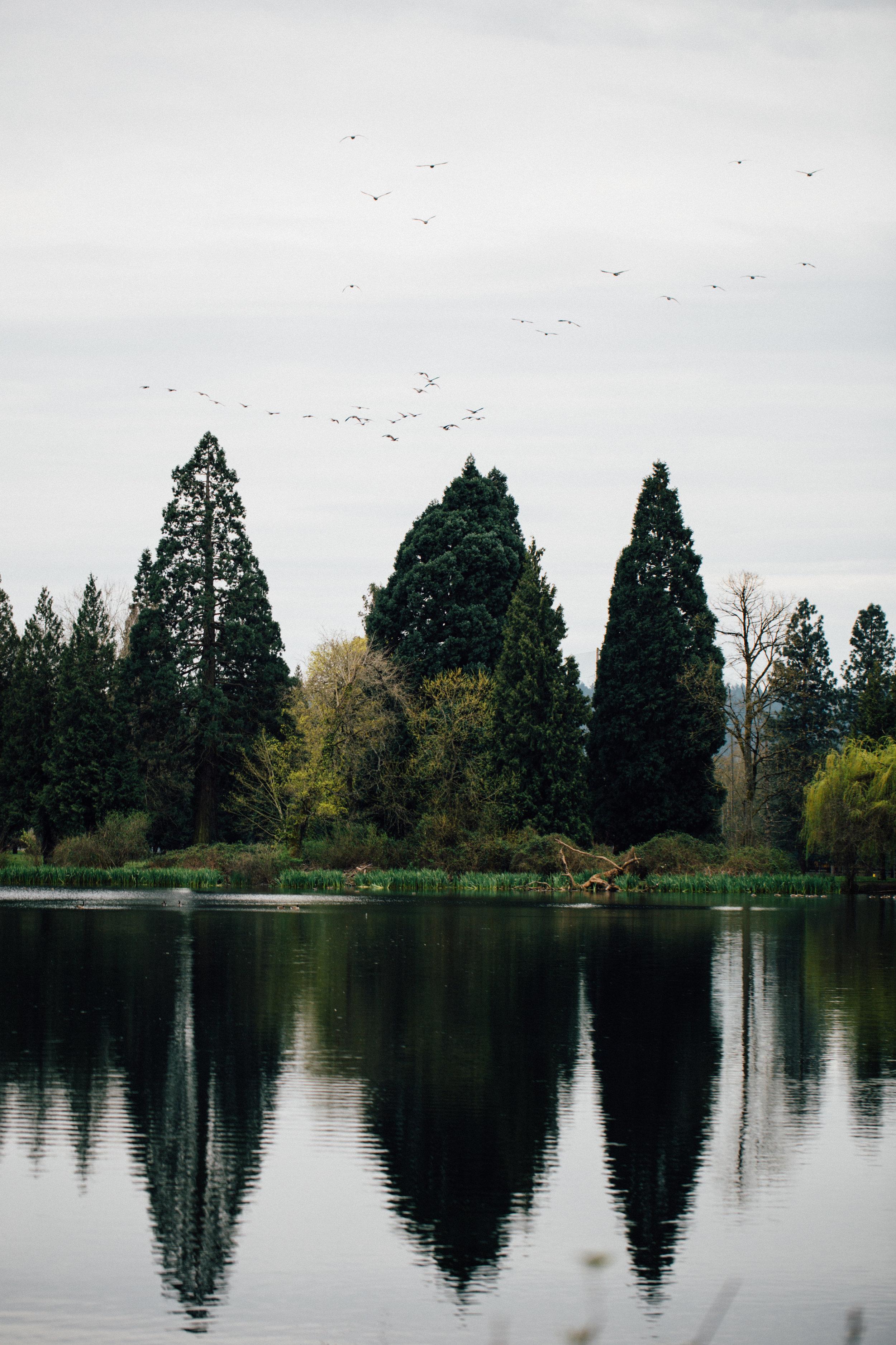 Sequoia reflections