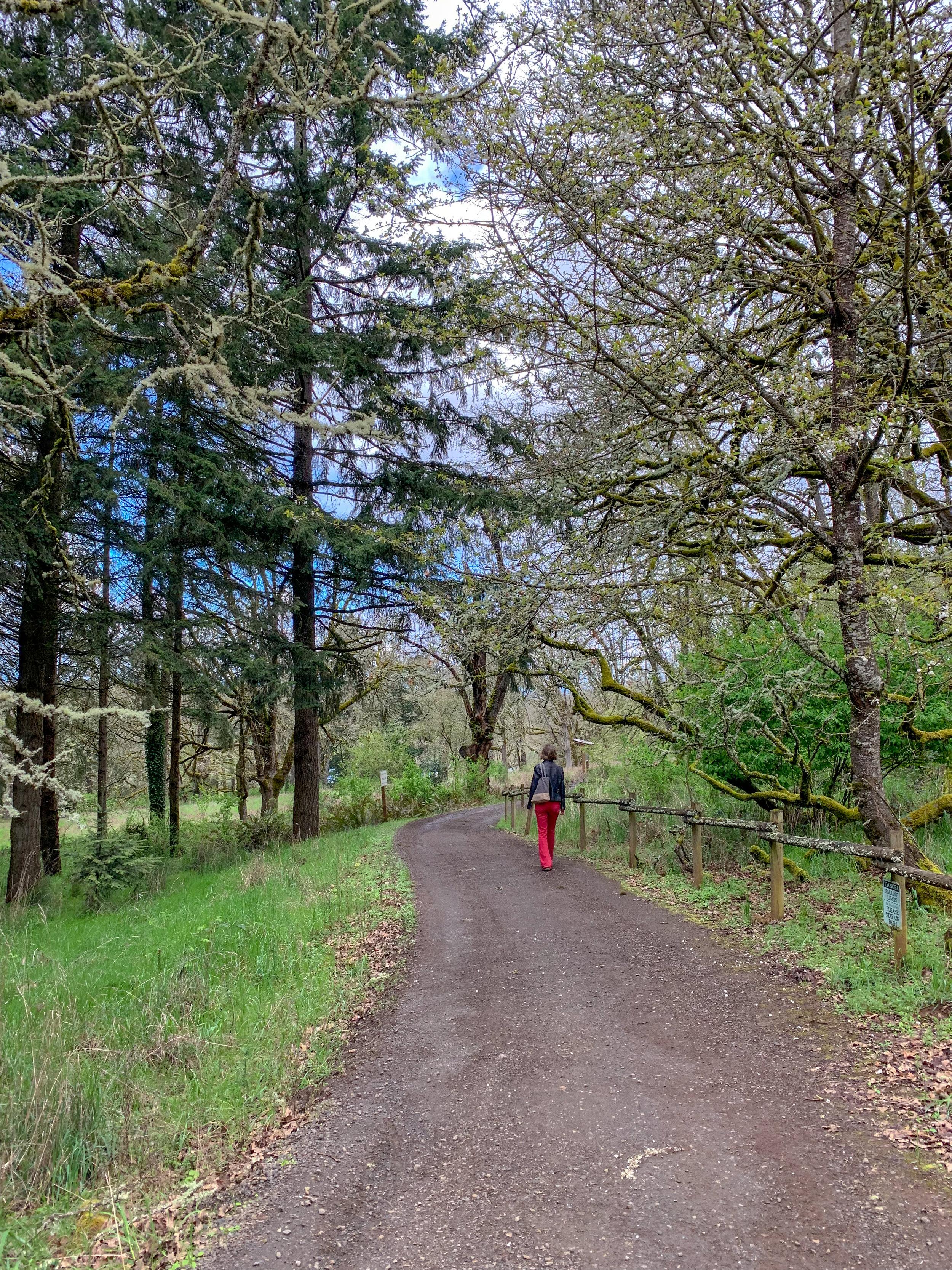 Elaine walking to an ancient oak grove