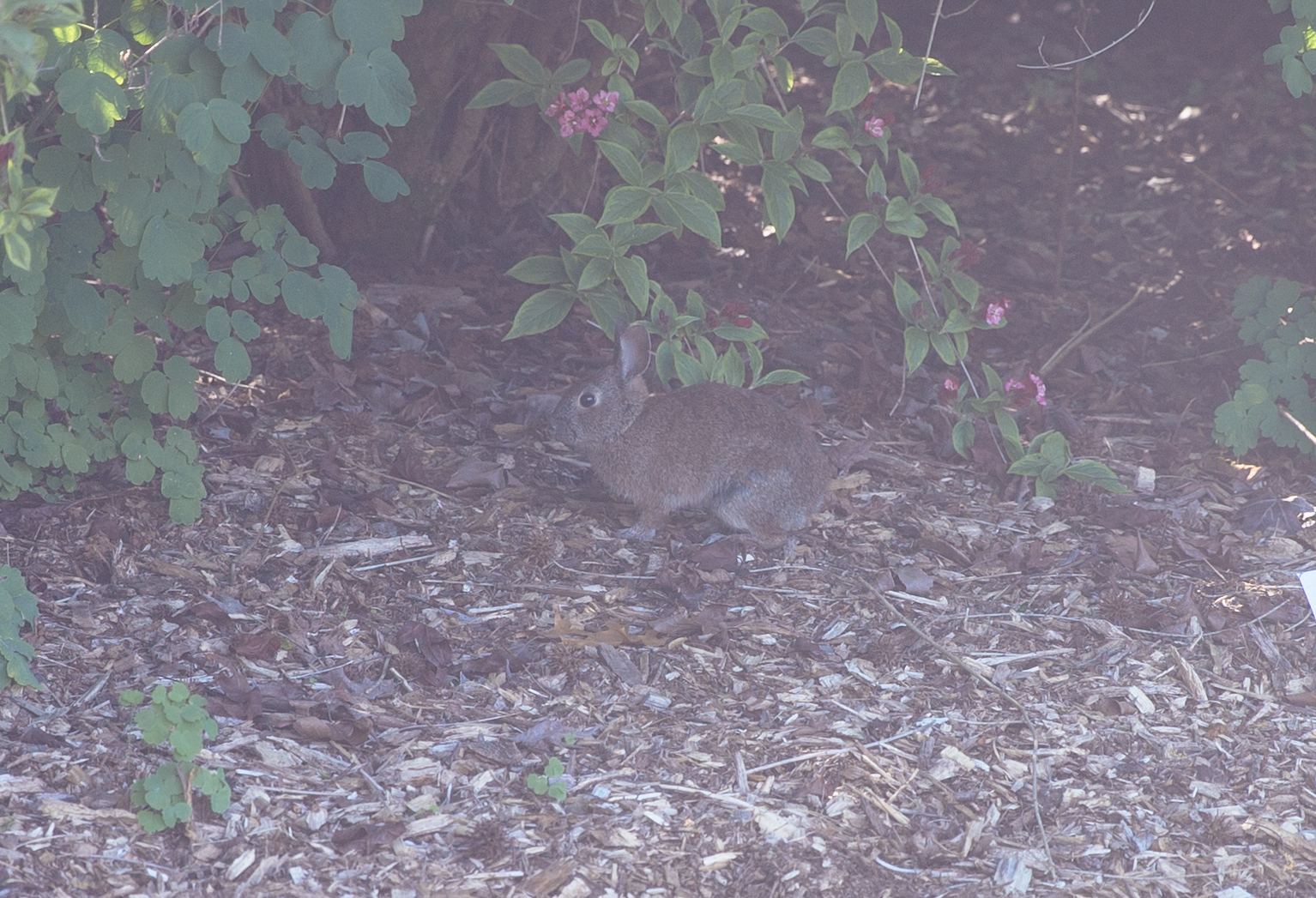A very camouflaged bunny