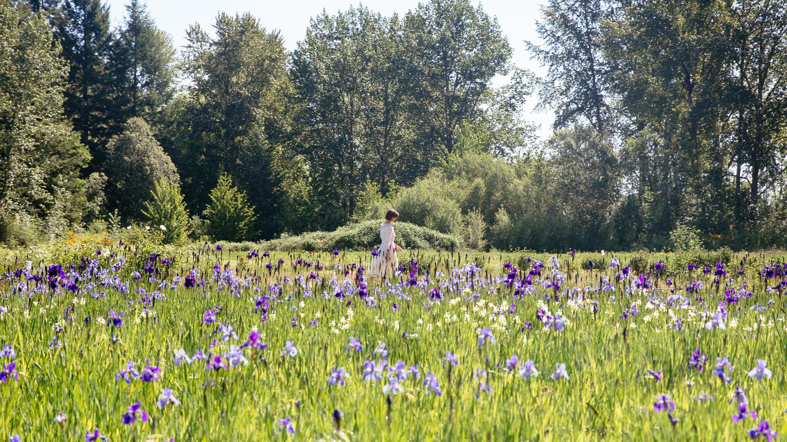 Elaine Schimek walking through an iris field