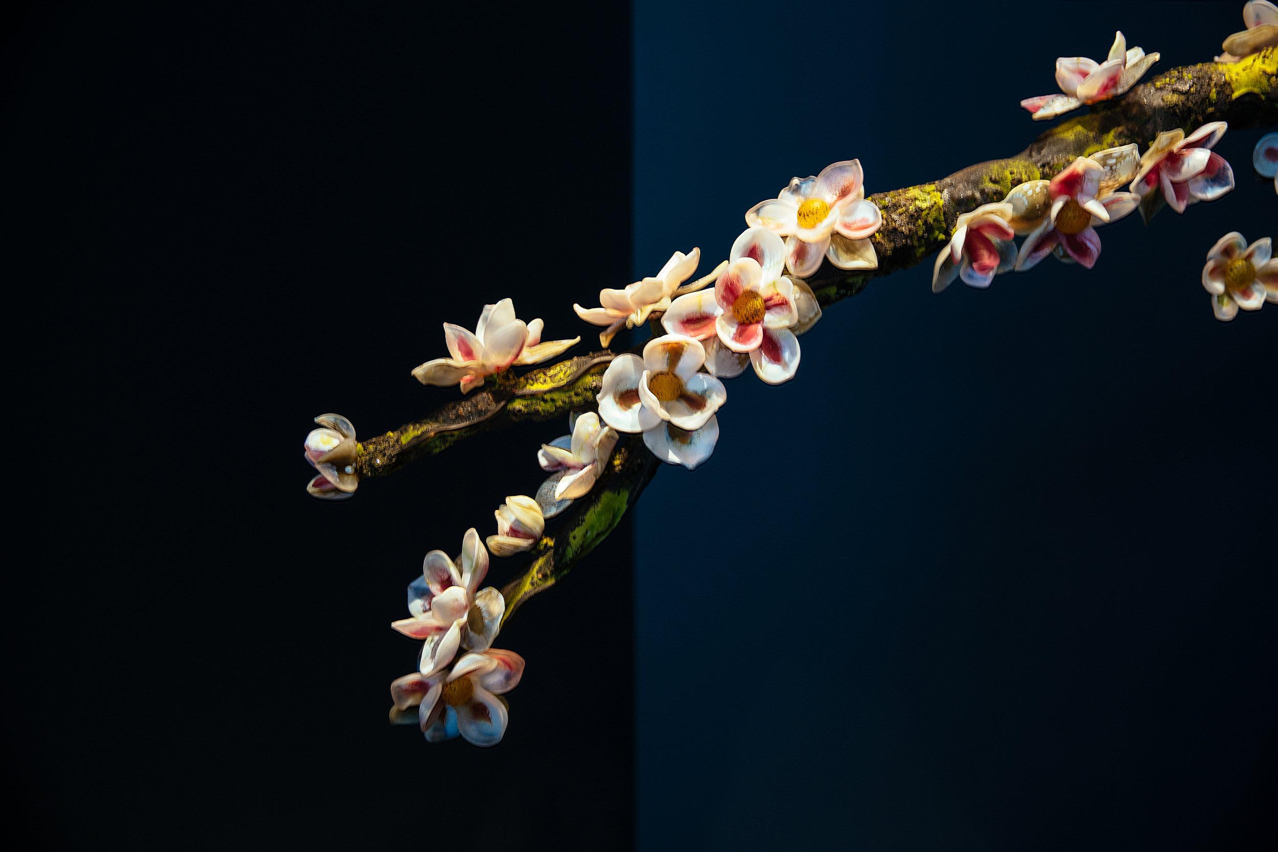 Debora Moore: Arboria, Magnolia