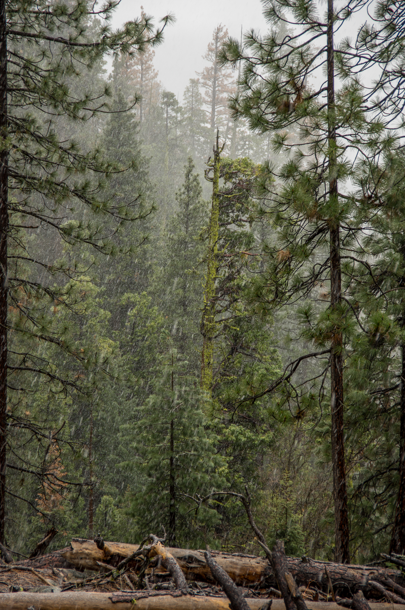 Tag 15 - Bad Weather Yosemite (39 von 133).jpg
