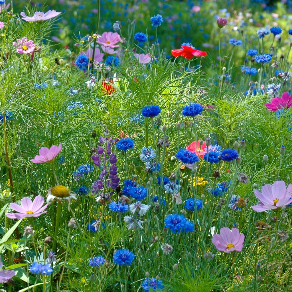 Susan's Wildflowers
