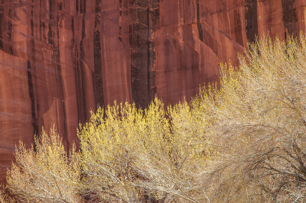 Spring colorcontrasts with theintricately patterned cliffs which surround deep canyons and vast vistas in Canyonlands National Park..