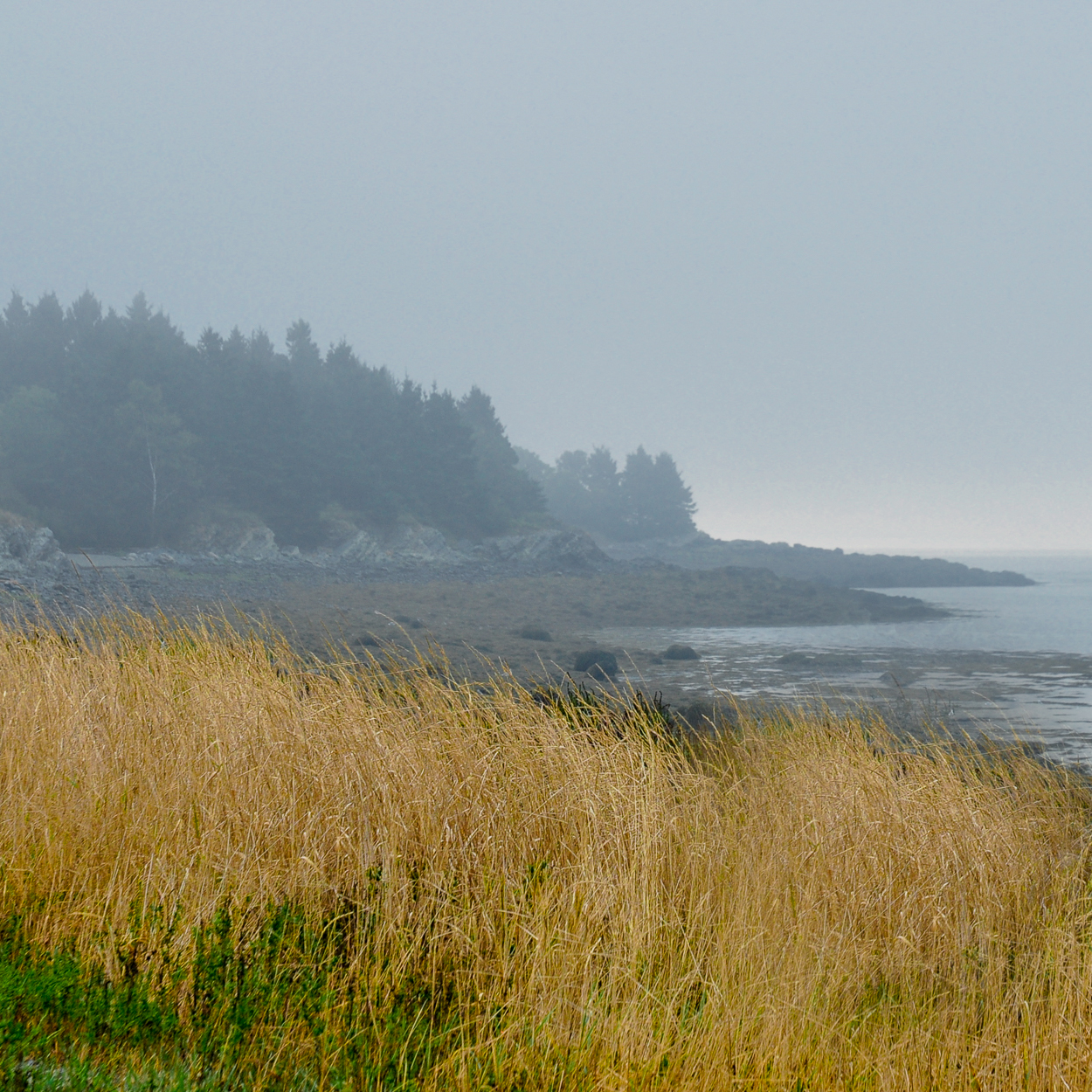 Foggy Morning - Cobscook Bay, Maine