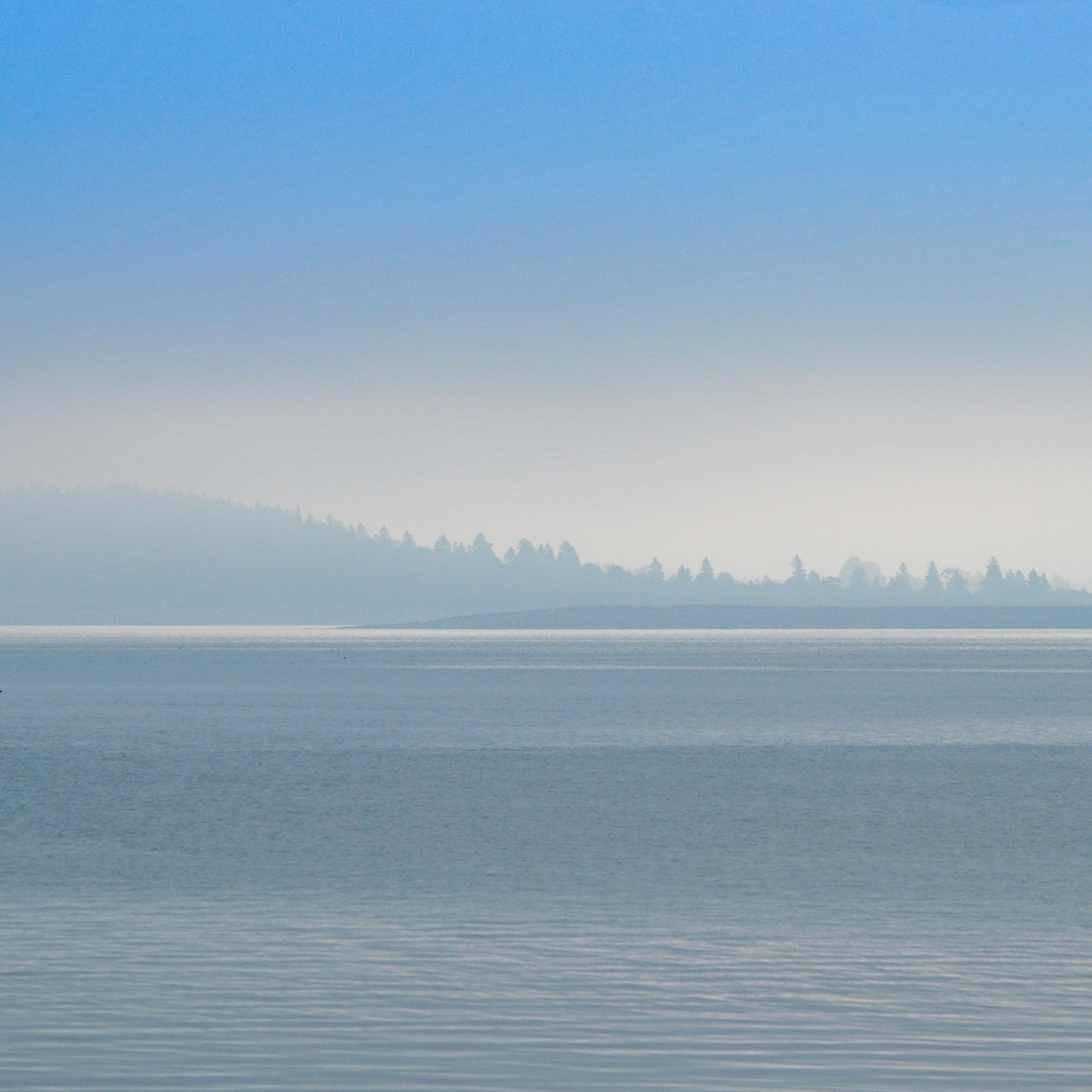 Blue Morning - Cobscook Bay, Maine