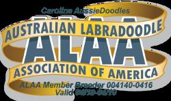 Carolina Aussie Doodles ALAA member