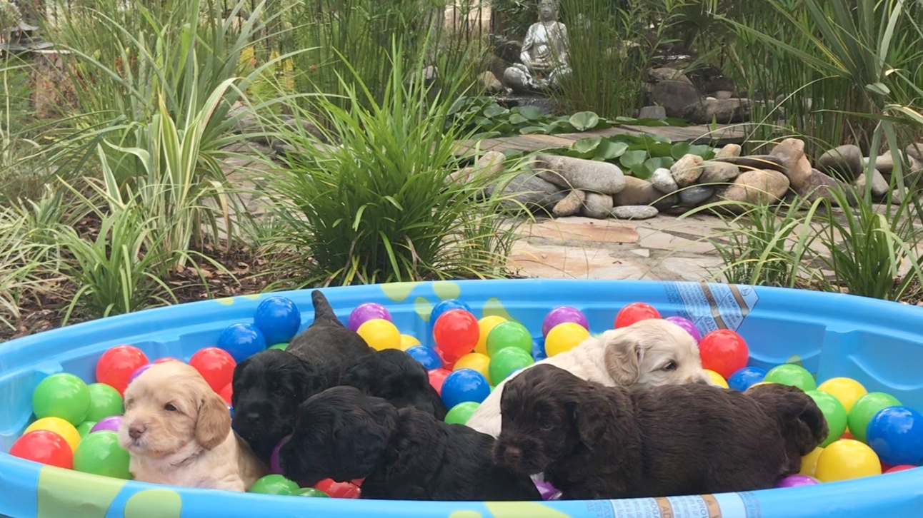 four weeks old -