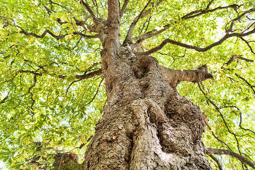 Levas © Melkan Bassil - Photographie disponible sur  www.imagesoccitanie.com