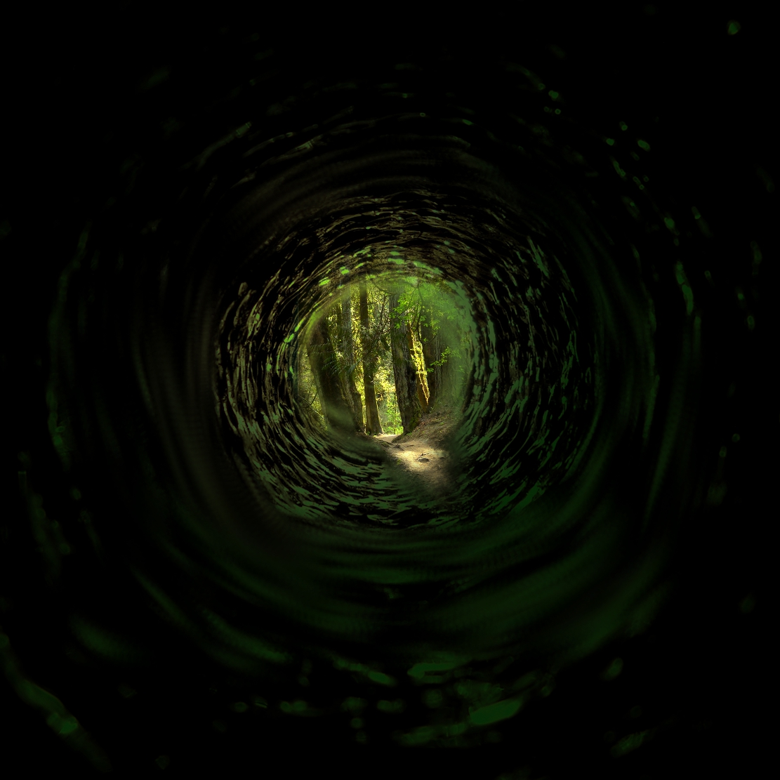 Into the Forest.jpg