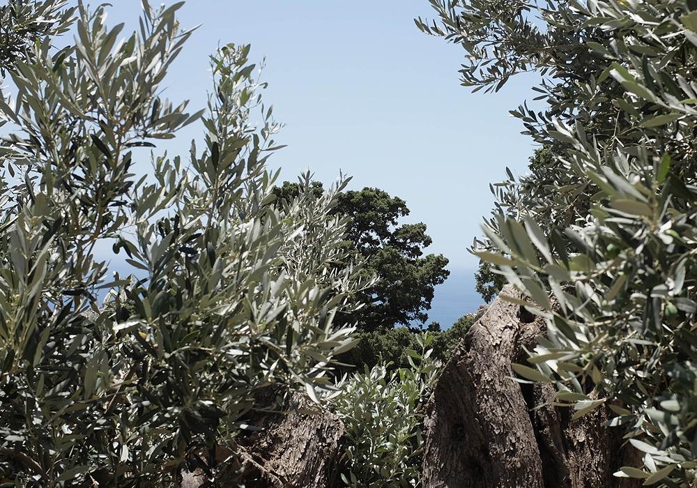 Crete_2.jpg