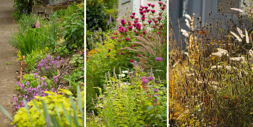 Tím, že je zahrada živá, můžete na ní pozorovat běh ročního období a kadžý měsíc se těšit z jiných květů, barev či nových plodů. Máte za okny vlastní diář. (zdroj:rhonestreetgardens.com;Hugh Johnson)