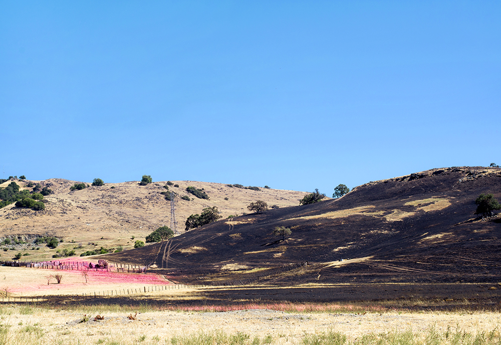 Scorched. New Almaden,CA