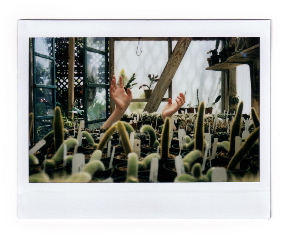 Cactus Hands