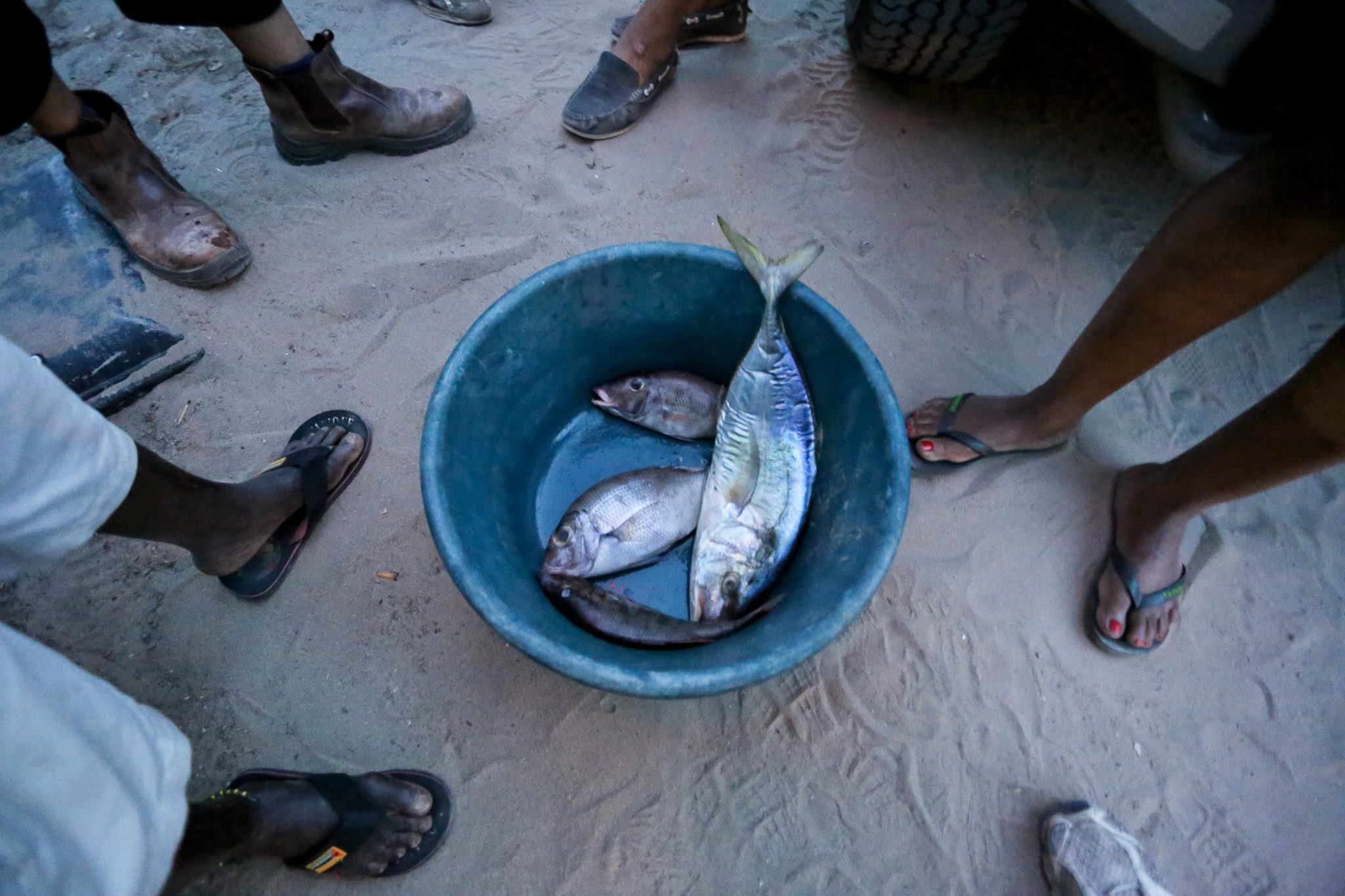 Coral reef fisheries support the livelihoods, food security and cultural practices of 500 million people worldwide. Here, a group of fisheries consider the daily catch in Tofo, Mozambique. Photo: Emily Darling
