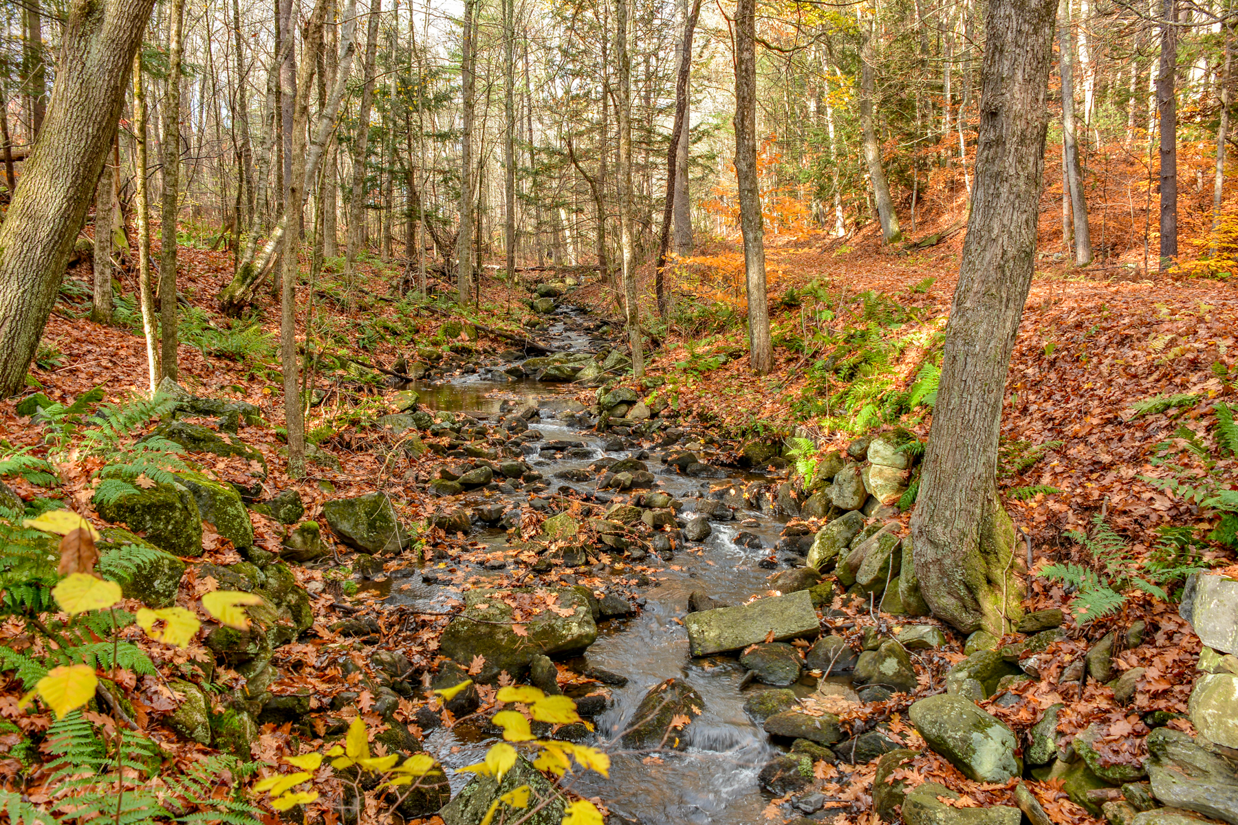 A small tributary that runs into Hop Brook, and then into the Quabbin.