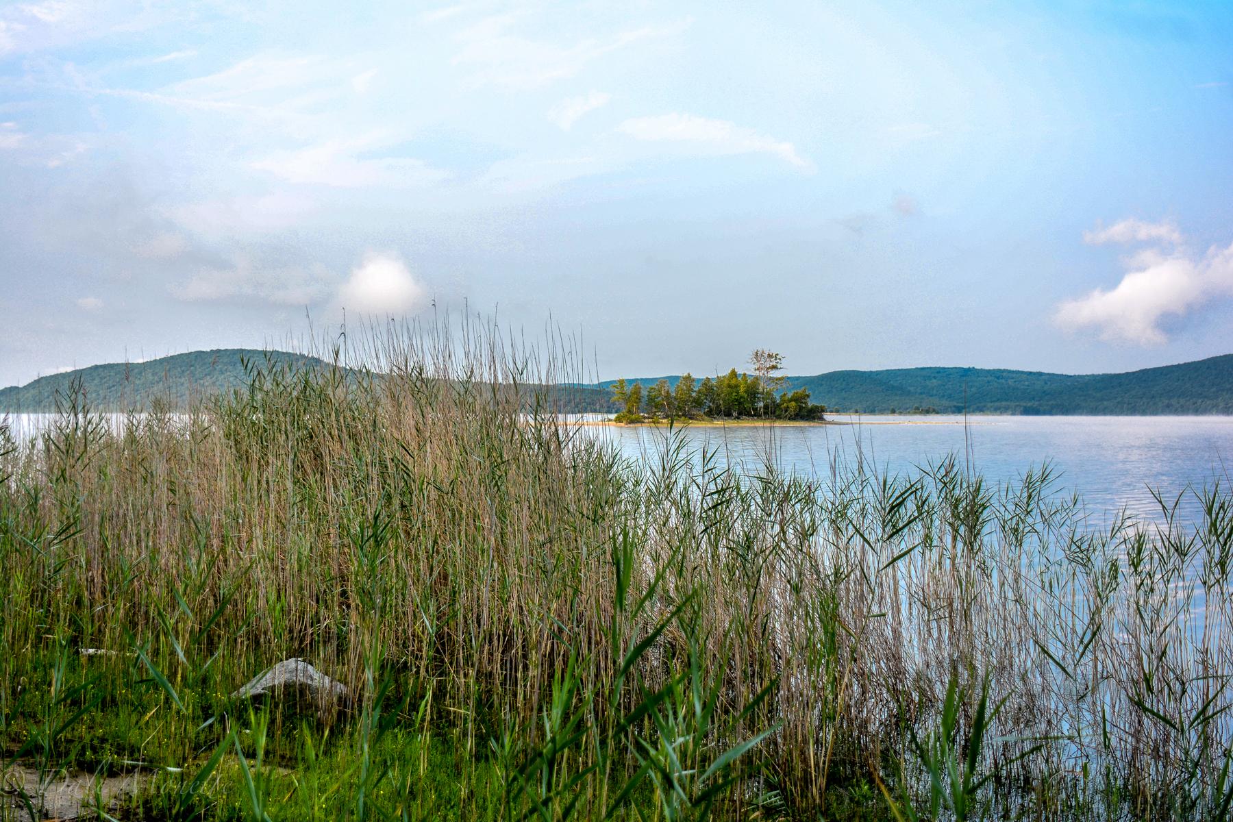 Late summer in northern Quabbin