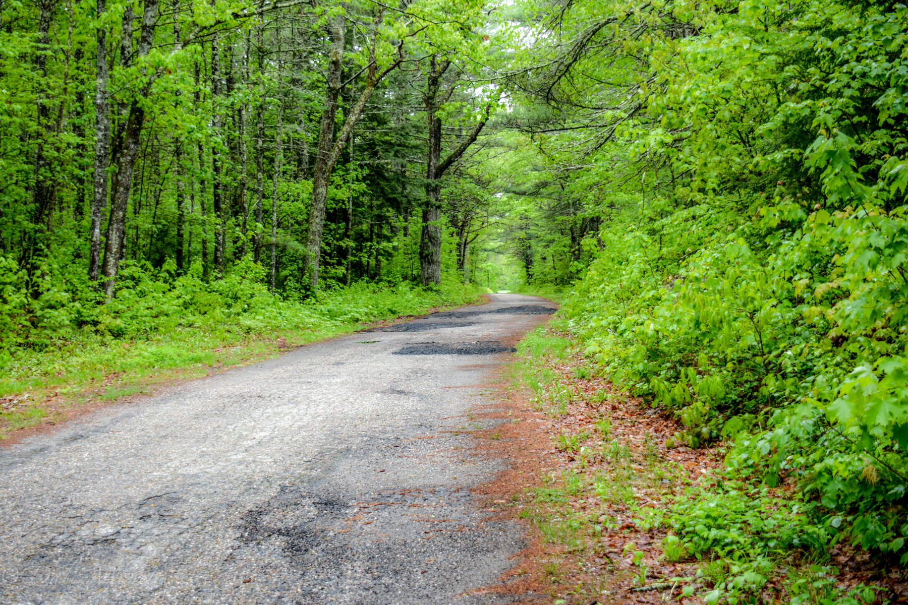 The road to Dana Common through Gate 40 in Petersham off of RT 32A