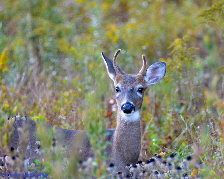 Same deer as the last shot, different angel.