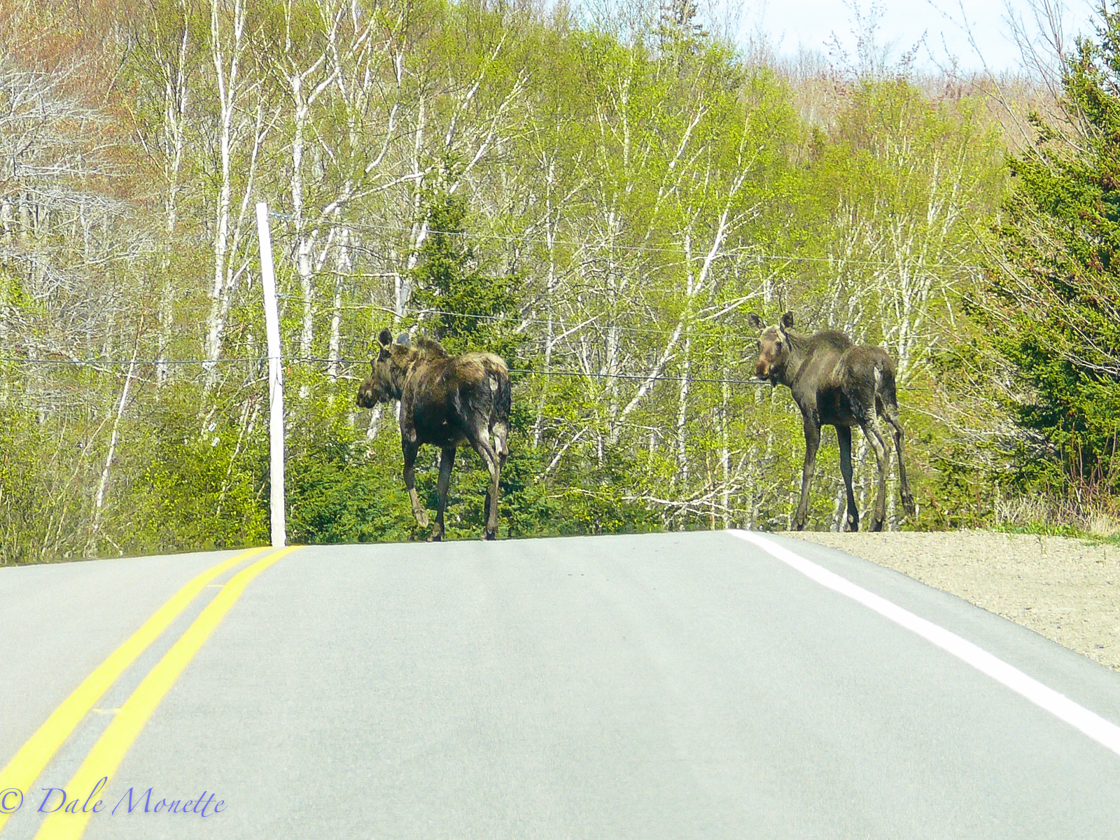 """Mom giving the """"crossing the road"""" lessons….. which is run as fast as you can."""
