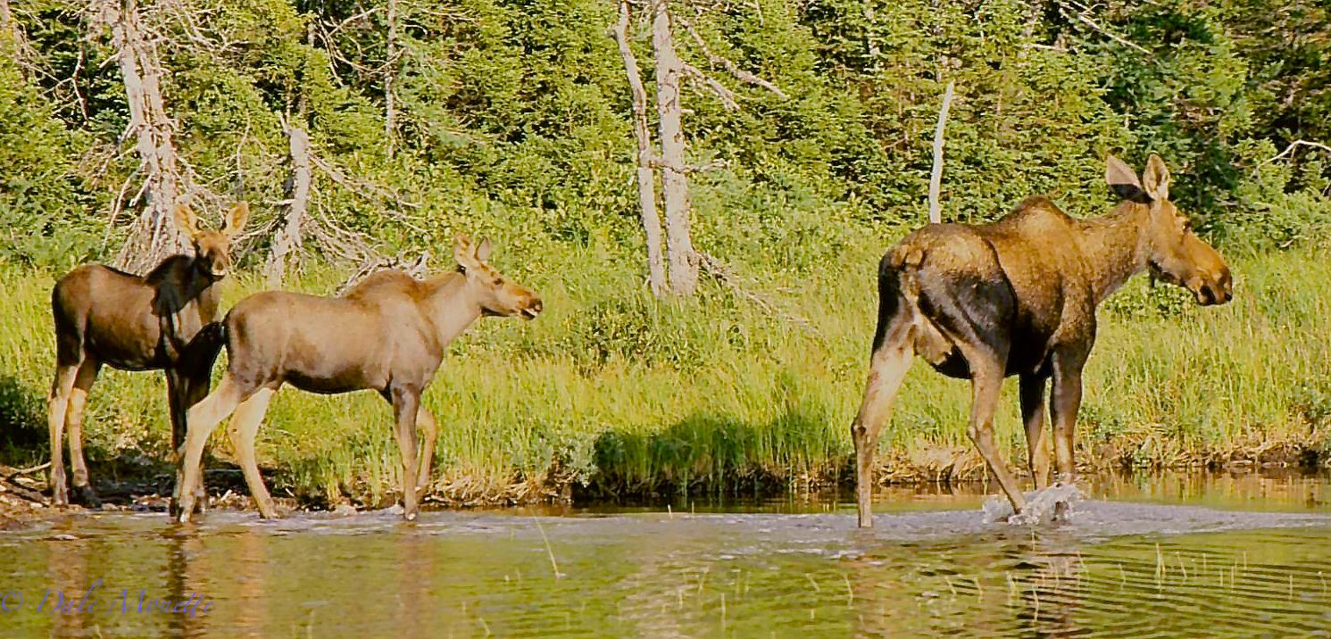 Mom and twins at Benji's Lake