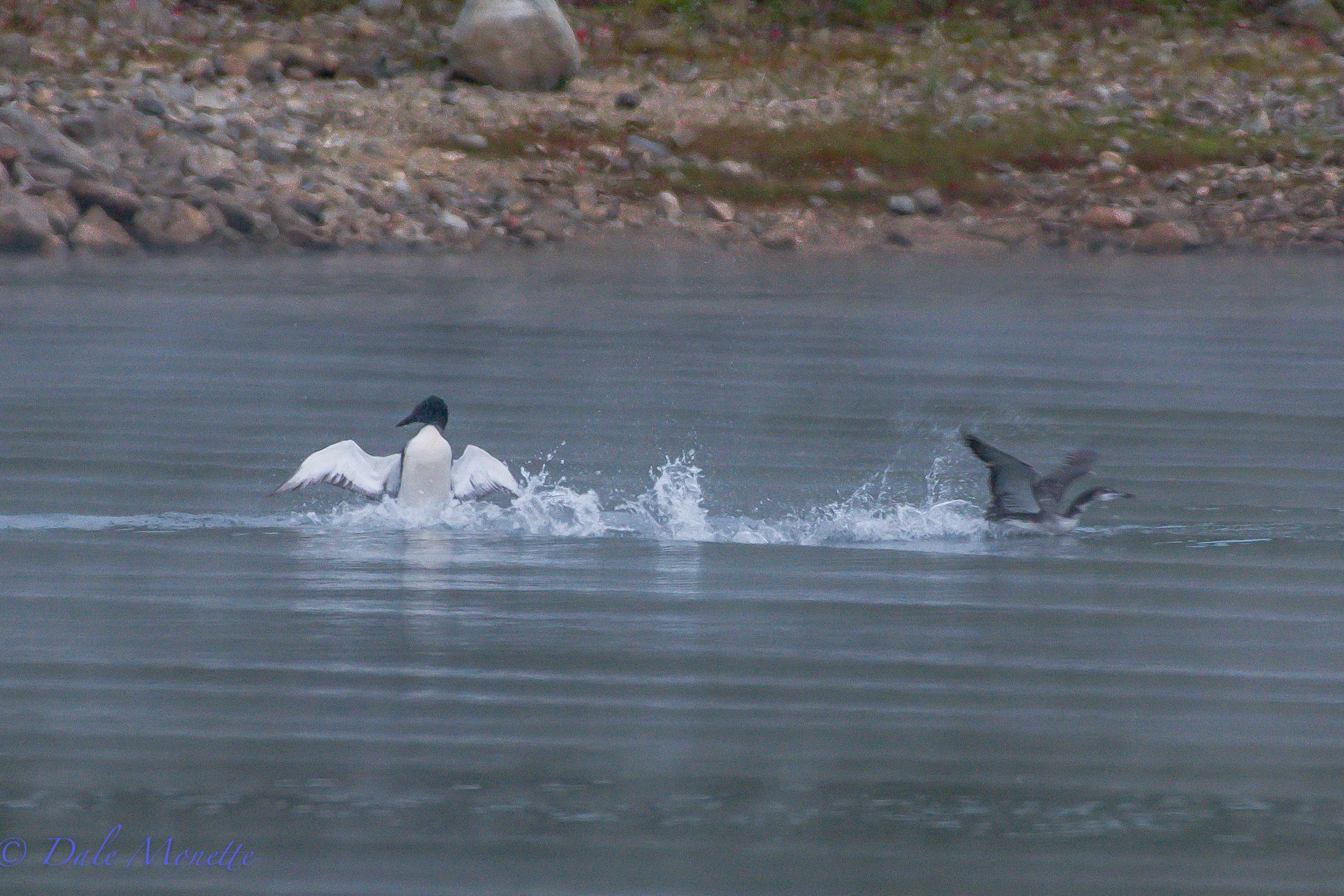 """The """"penguin dance"""" !"""