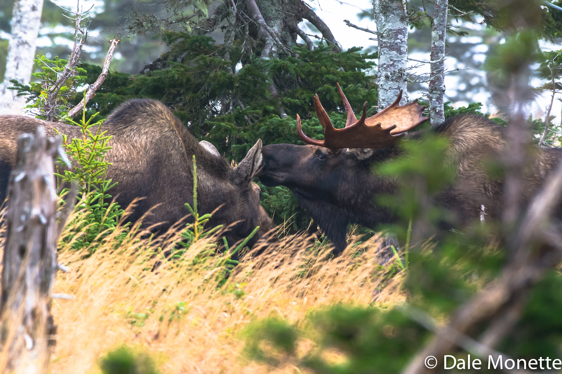 moose number four,  MOM !