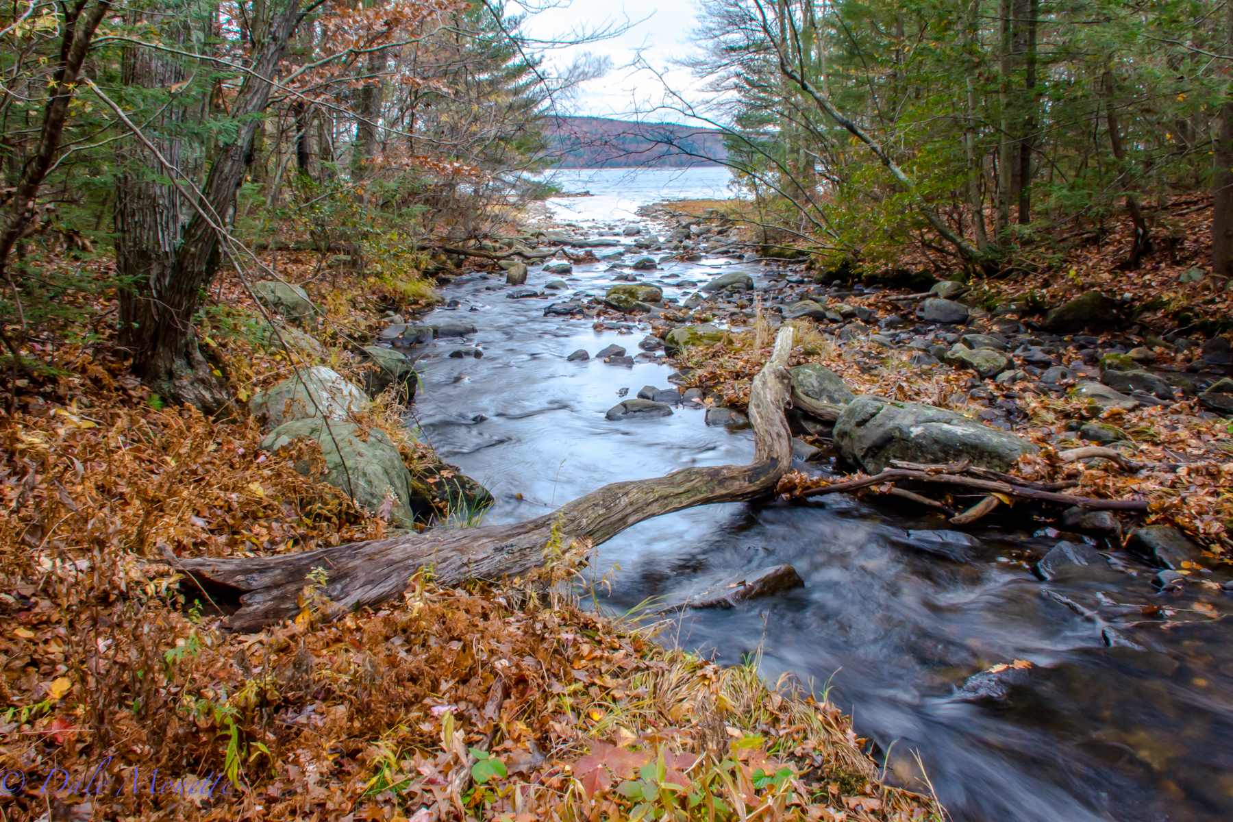 Hop Brook running into the Quabbin,  11/1/15