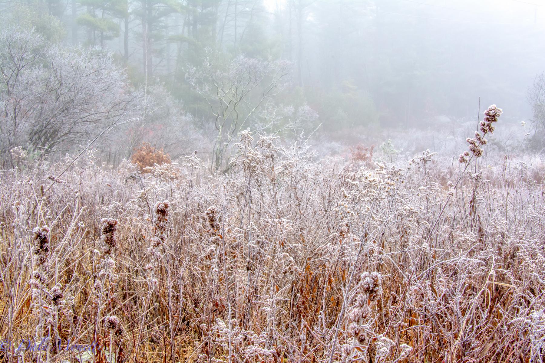 Frosty morning!