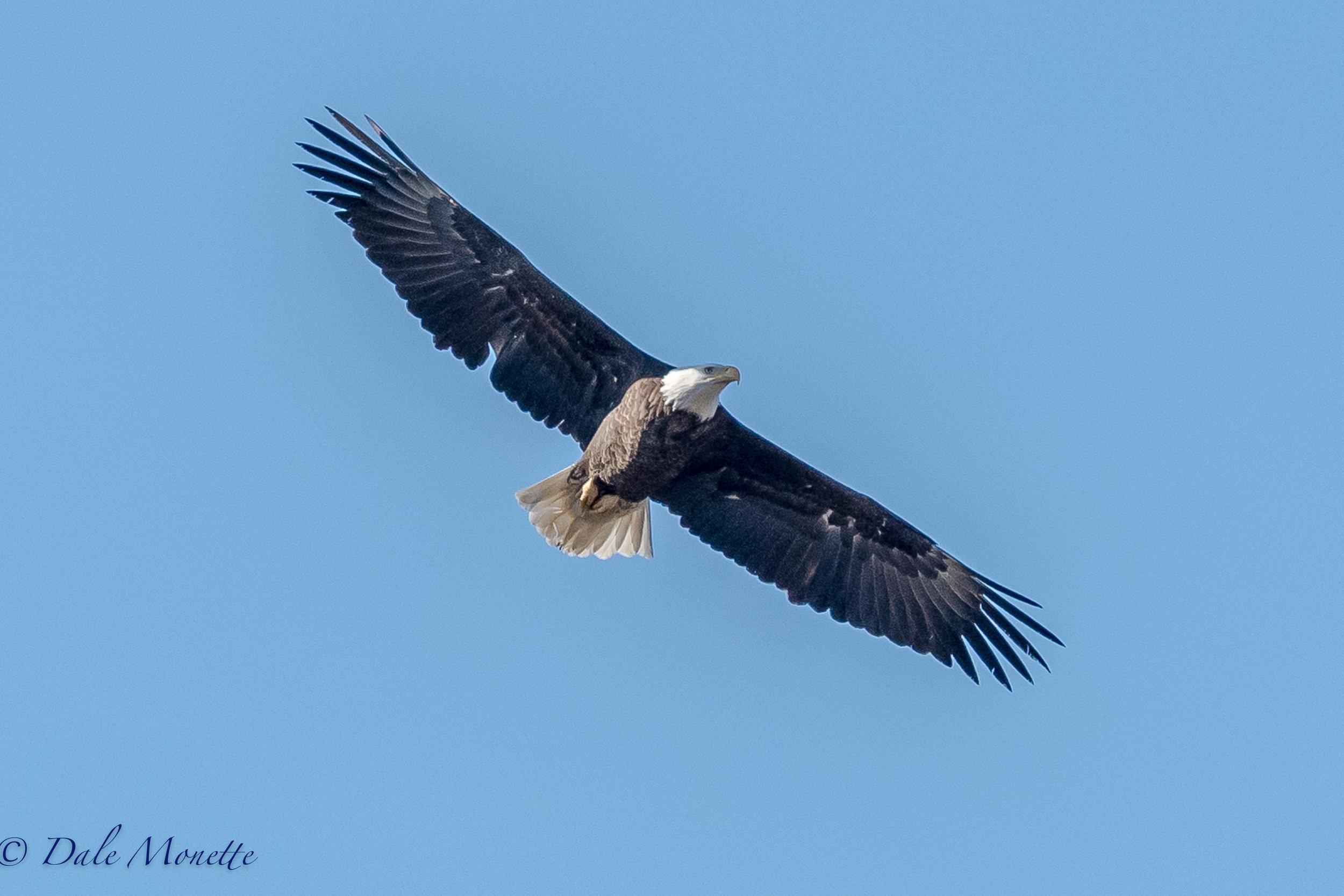 EAGLES, OWLS AND HAWKS — North Quabbin Photography