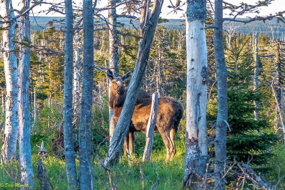 Cape Breton Highlands National Park. 6/12/17, 5:45 Atlantic Standard Time. No words can explain the feeling......
