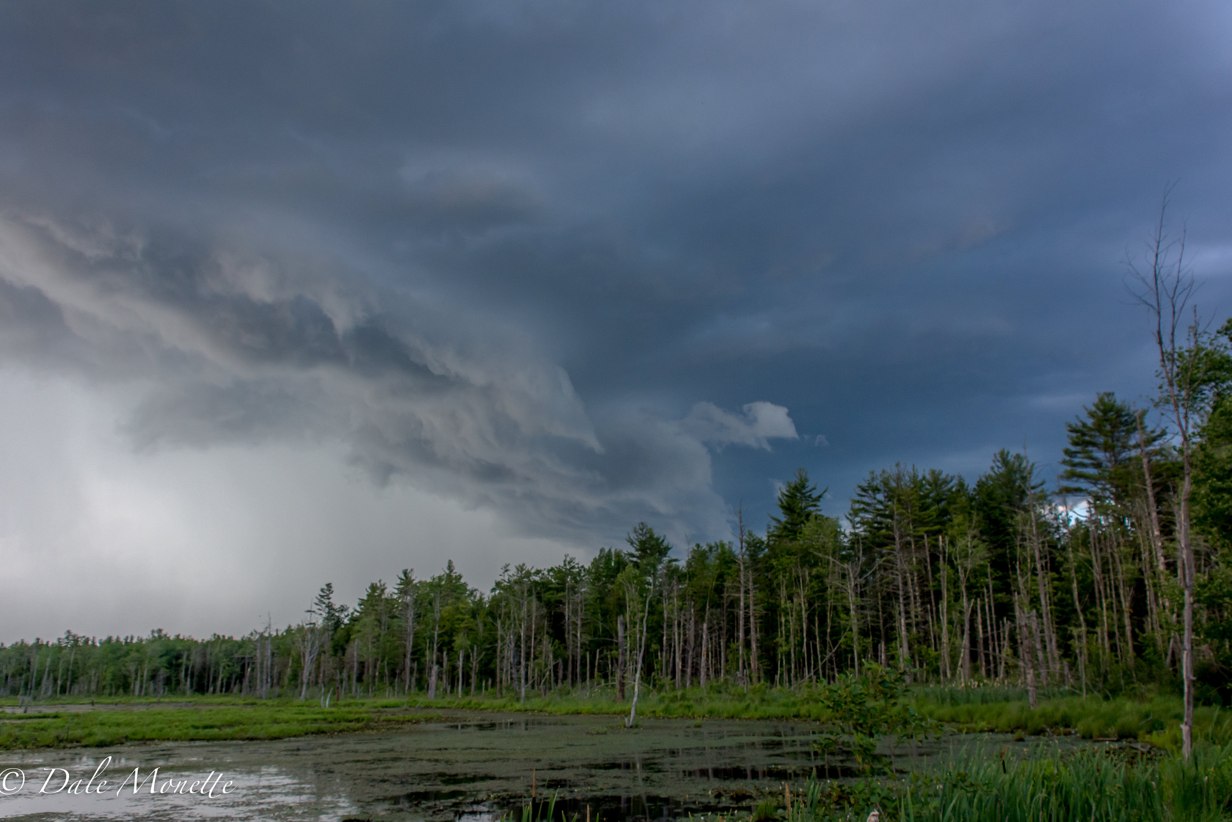 North Orange Wildlife management area about an hour ago (6:45PM) this thunder storm built up right in front of us as we were watching herons...... 6/25/17