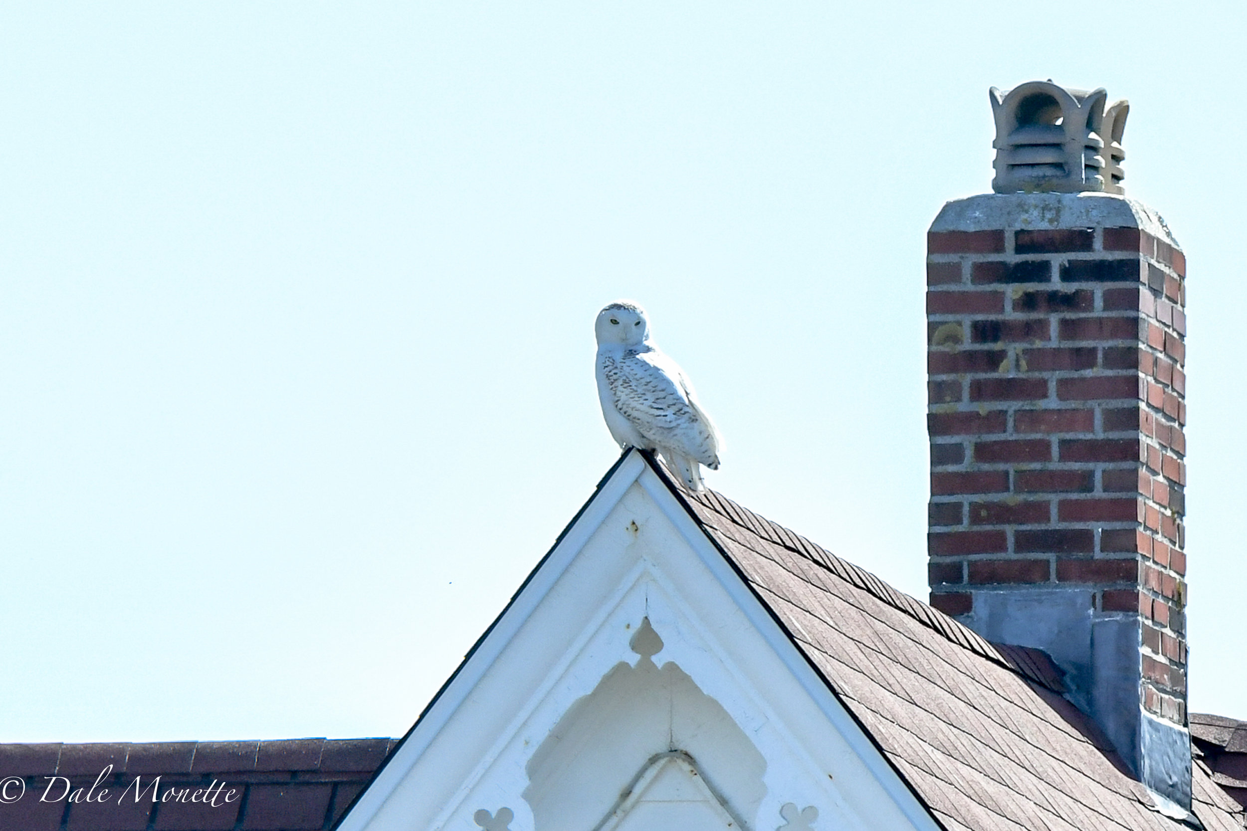 This is the house connected to Nubble Lighthouse in York Maine. We visited it last Monday. While we were there a snowy owl landed on top of the roof point ! Quite the surprise….. 4/23/18