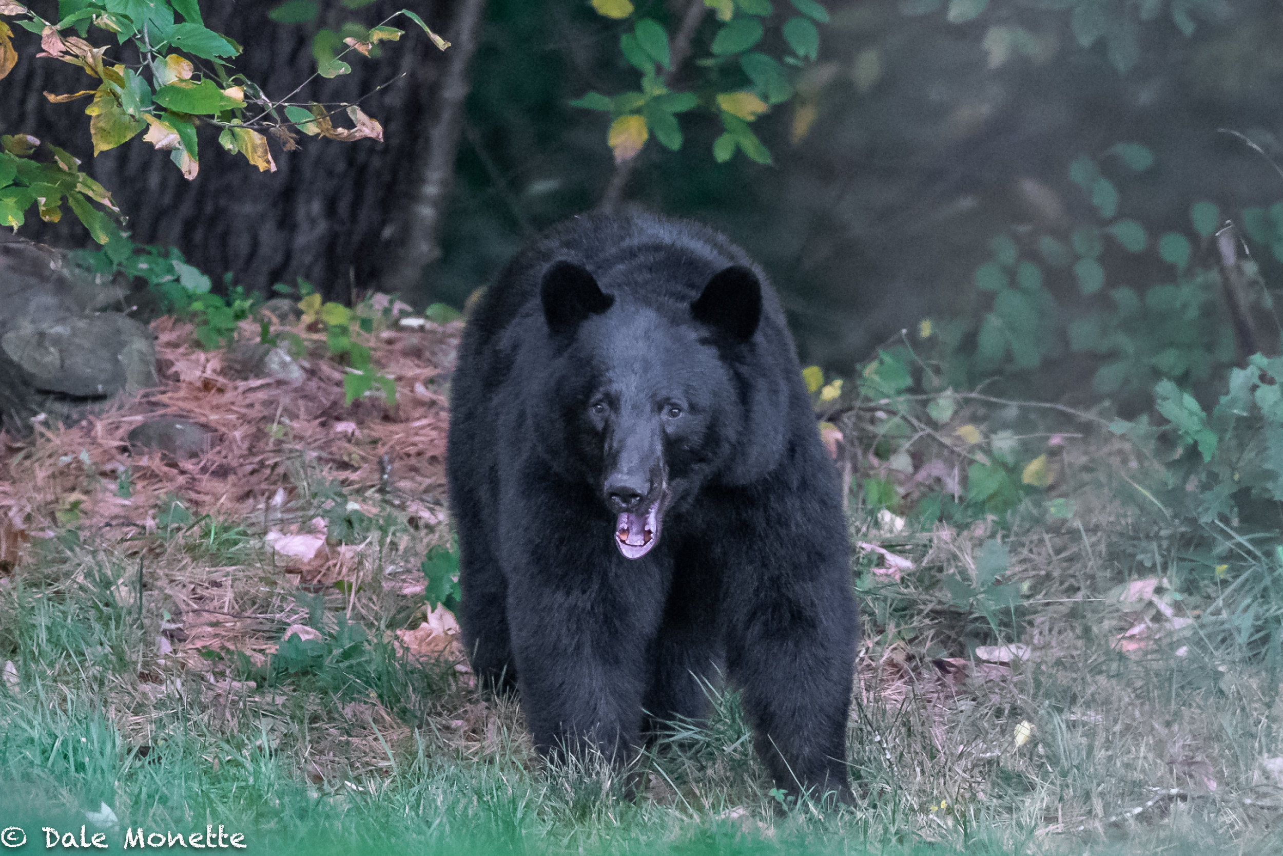 I just told this bear the joke about the 2 bears that walked into a bar :)