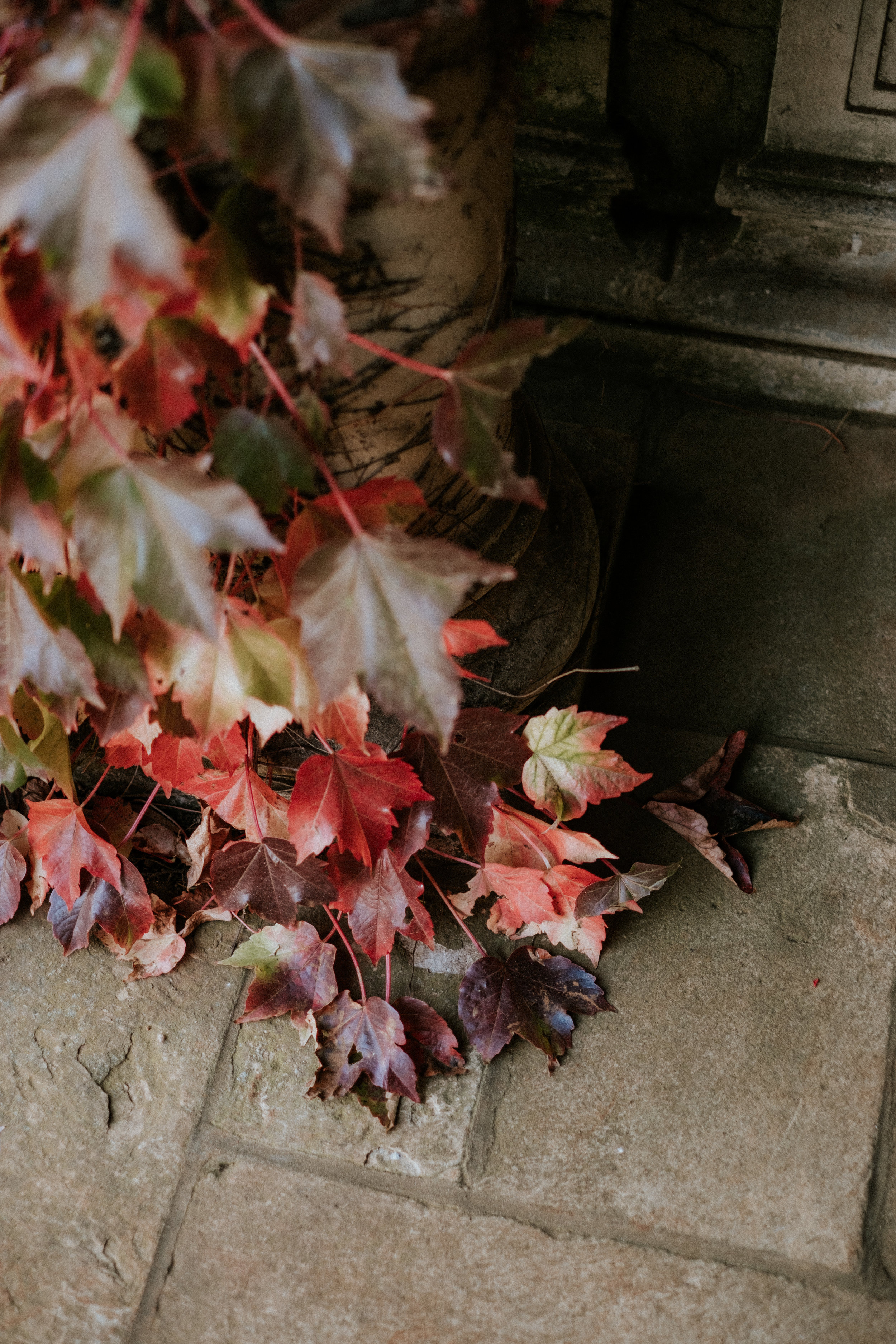 Image by photographer Van Middleton at beautiful Bendooley Estate in Berrima, Southern Highlands NSW.