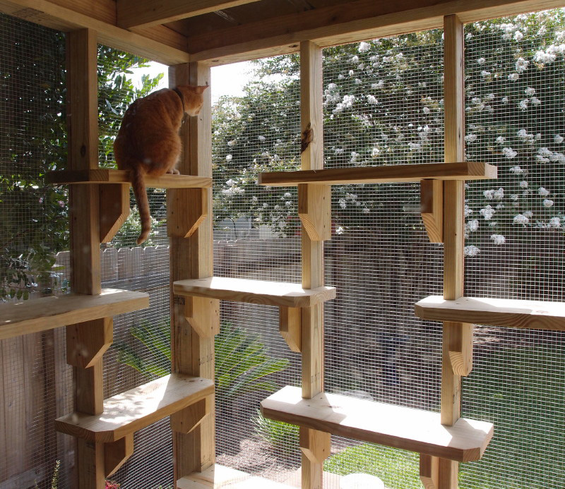 8_Catio-Research-1.jpg