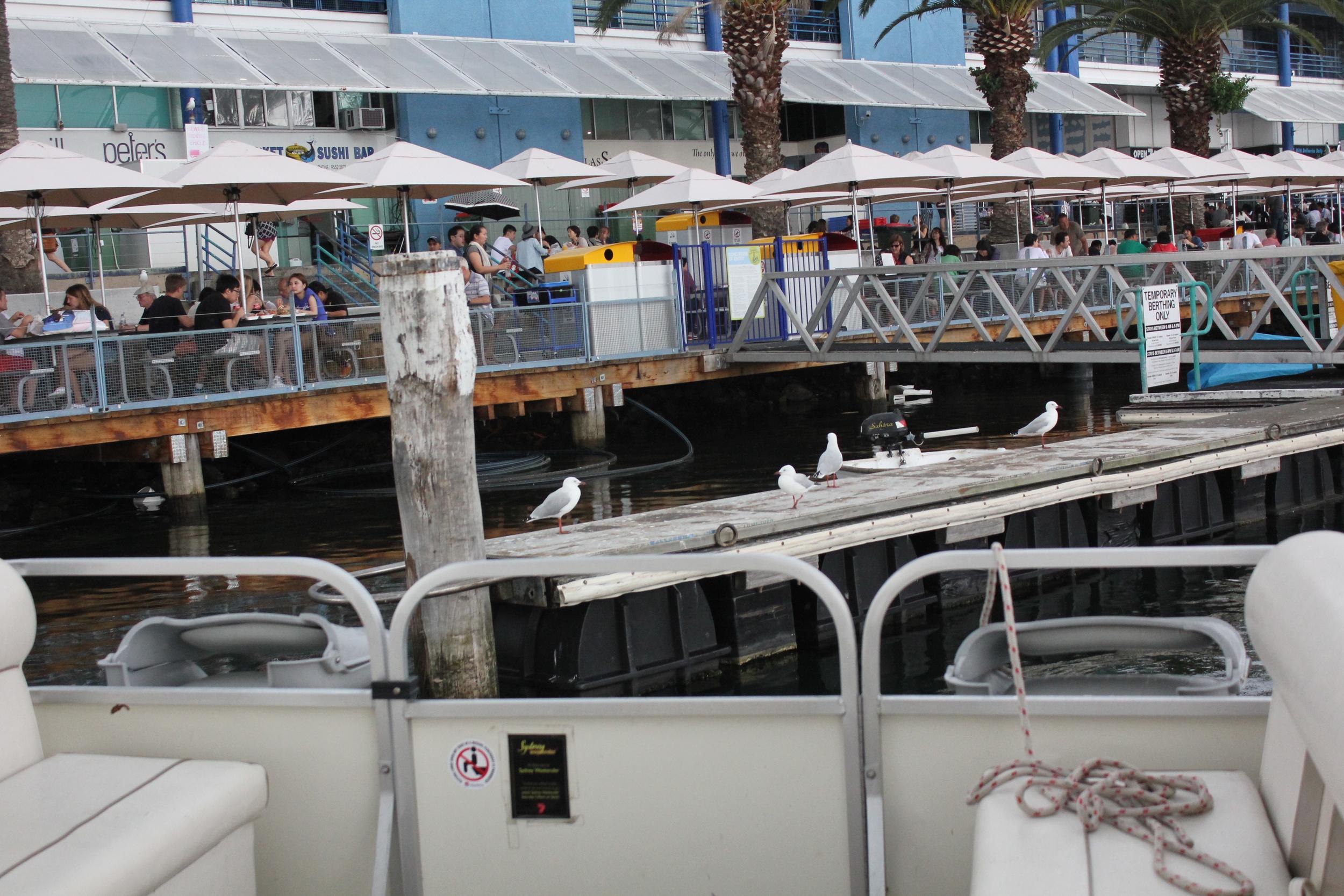 Sydney Fish Markets via Boat