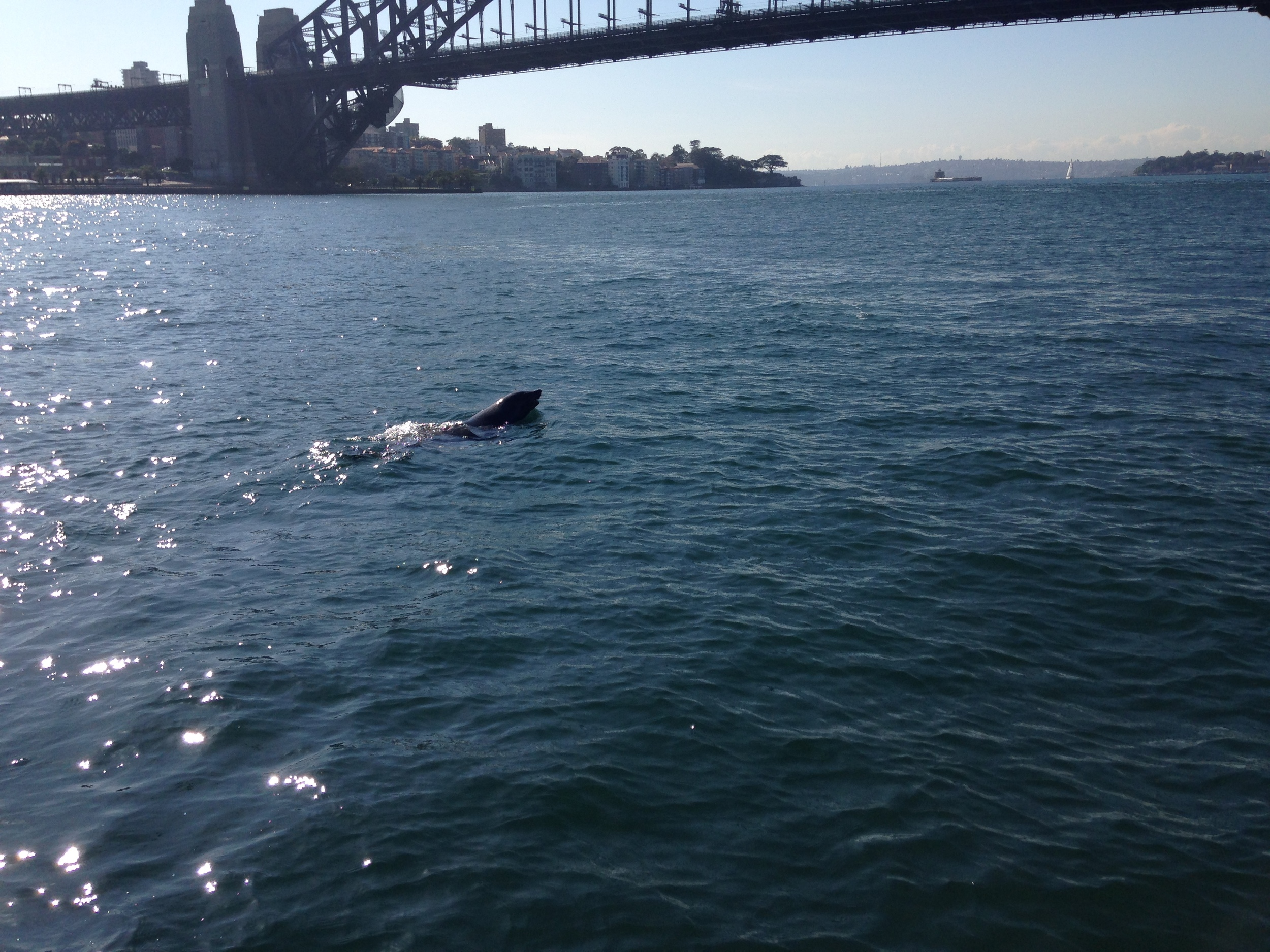 Sydney The Seal @ sydney charter boat hire