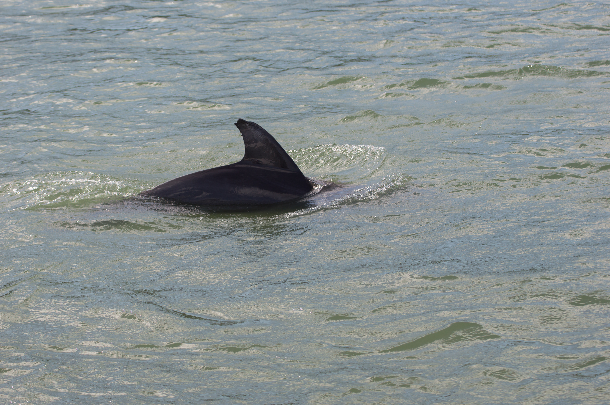 Marco Island - Nov 29 2015-103.jpg