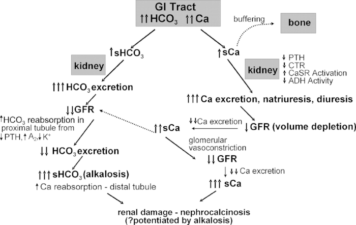 "Schematic of how hypercalcemia and metabolic alkalosis are generated and maintained in the milk alkali syndrome. GI, gastrointestinal; HCO3, bicarbonate; CTR, calcitriol; ADH, antidiuretic hormone; A2, angiotensin 2; K+, potassium. An ""s"" preceding the name indicates serum.  Clinical Journal of the American Society of Nephrology"