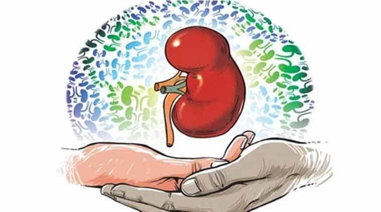 kidney1.jpg