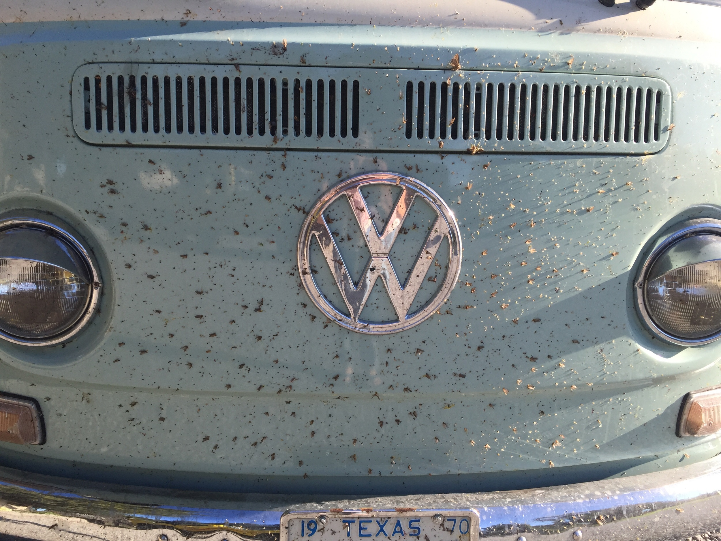 2,289 miles of bugs... right before the carwash in Port Angeles