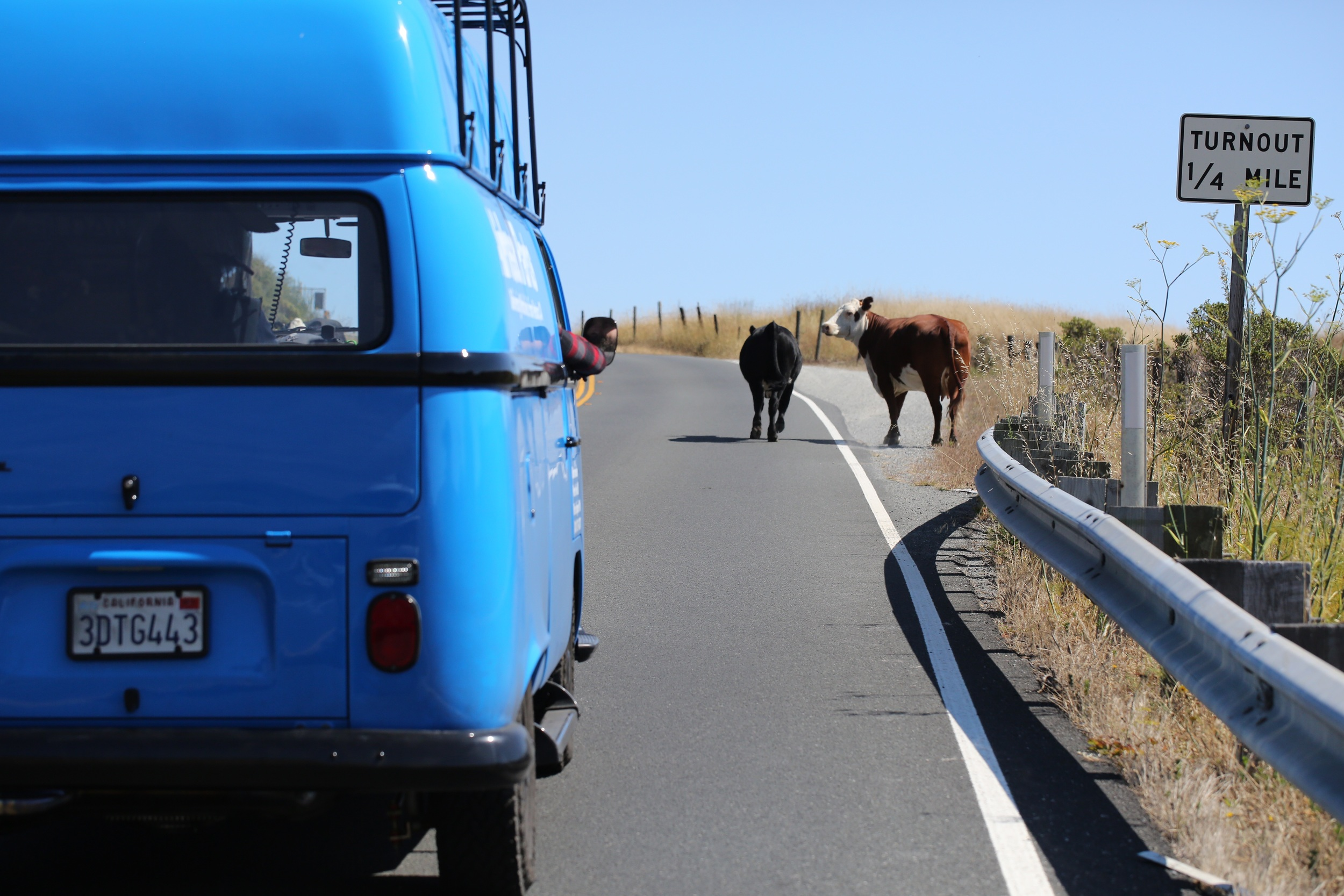 Cows blocking the road