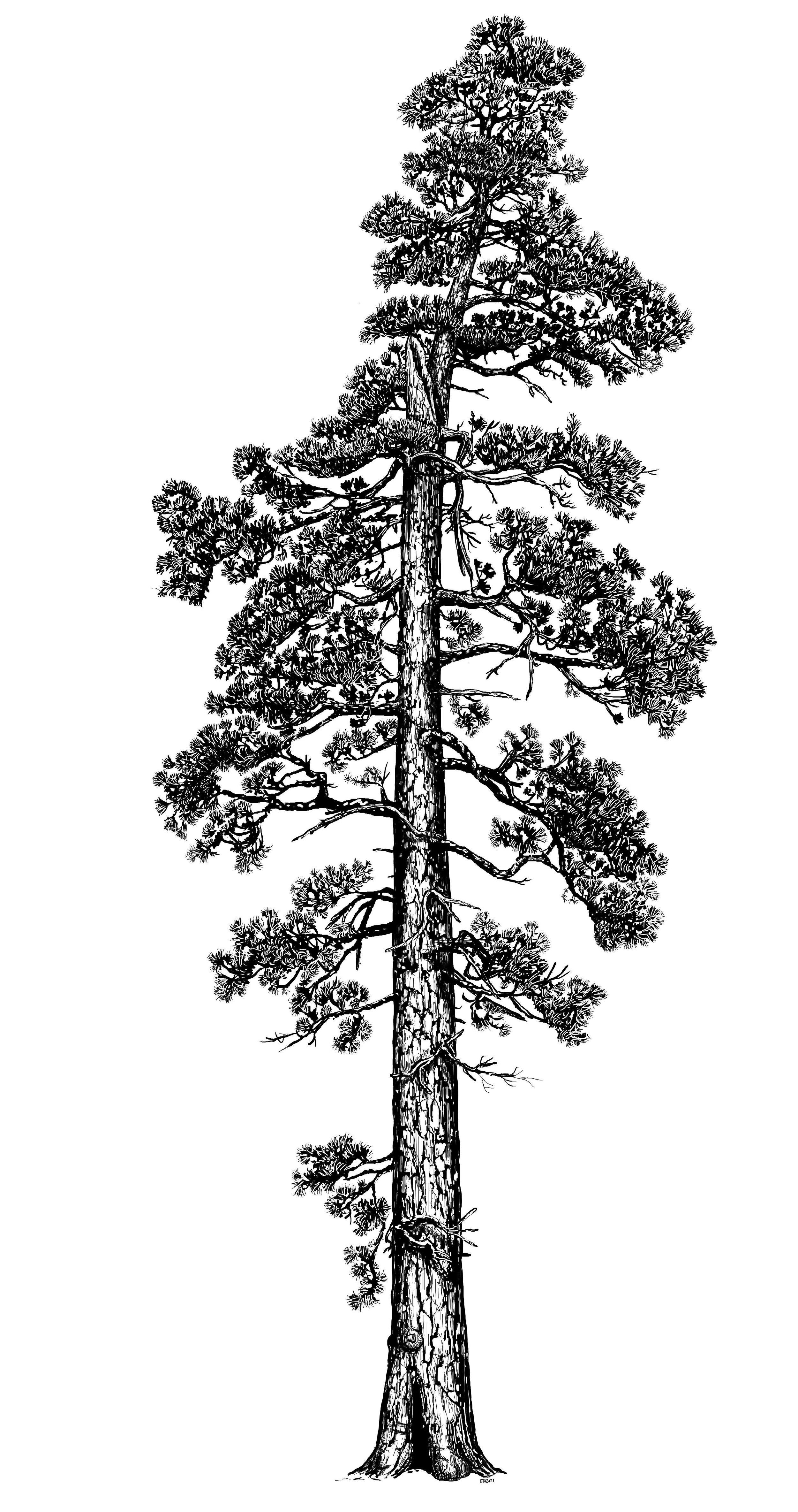 La Pine Giant.Finalfinal.jpg