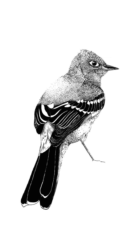 flycatcher.jpg